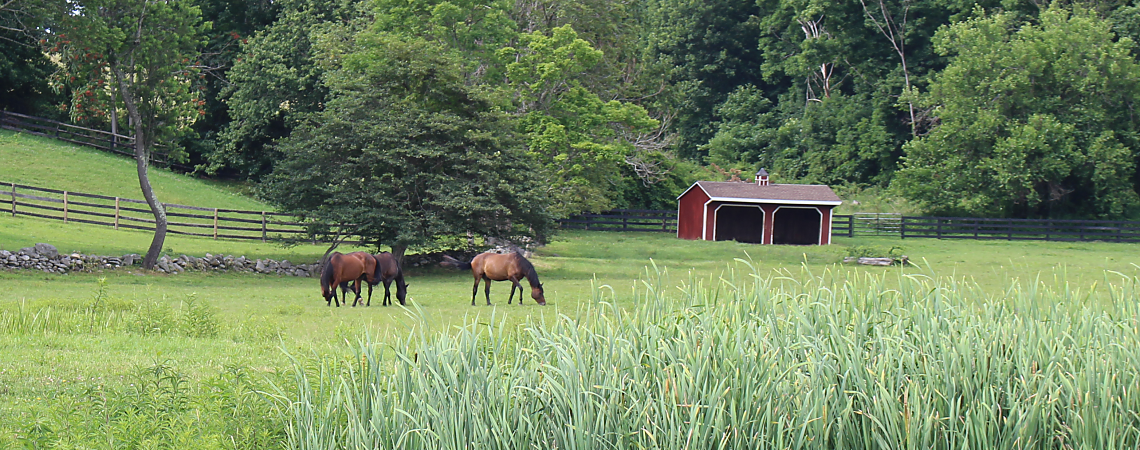 Horses in a Salt Point Meadow
