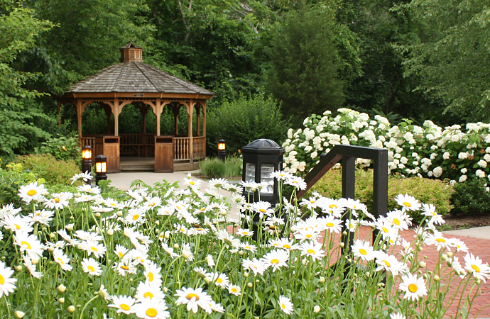 Gazebo and Daisies
